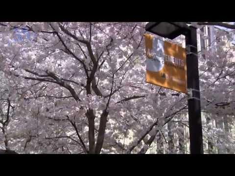 New Jersey City University & International  Academic Alliance