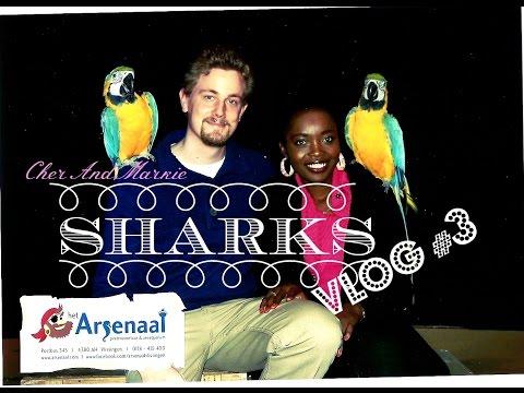Sharks! Babe i'm scared! (Vlissingen) Vlog #003