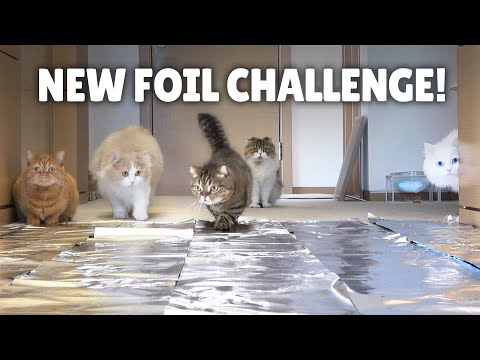 Foil Challenge! Do Cats Walk on Foil? | Kittisaurus