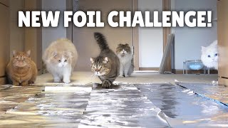 Foil Challenge! Do Cats Walk on Foil?