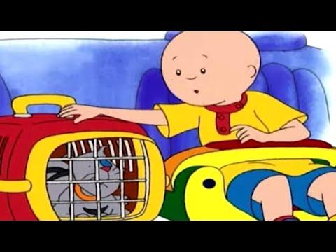 Caillou Türkçe - Caillou ve Hasta Kedi | kayu cizgi filmi | çizgi filmleri çocuk