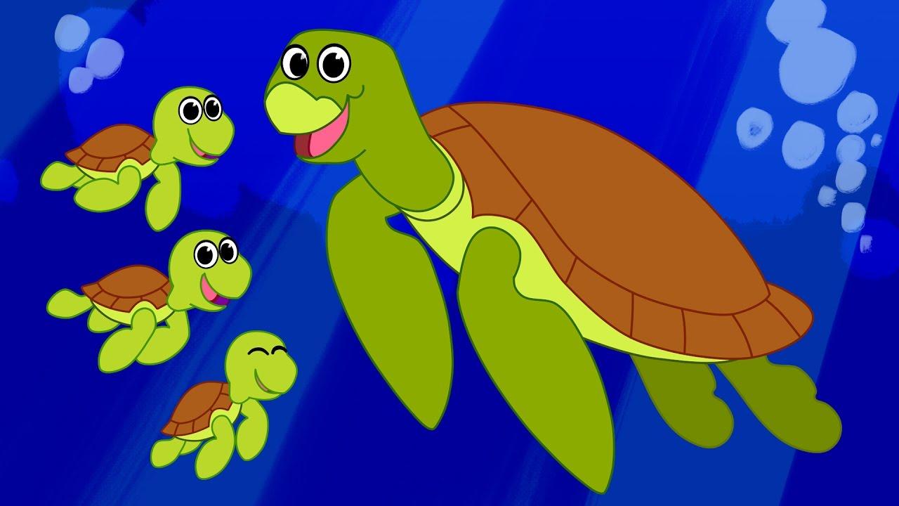 Sea Turtle Cartoon Cute Animated Ocean Animals Video For