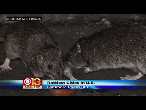 Jonny Hartwell - TOP 10: Rattiest Cities in the USA; Did Pittsburgh Make the List?