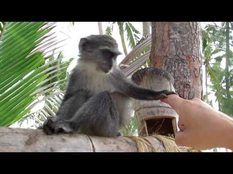 Zanzibar 2016-Travel video