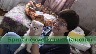 Британские кошки (анонс)