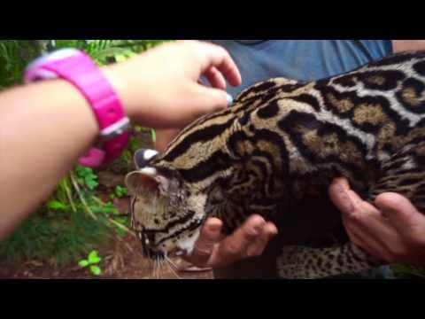 Costa Rica: The Initiative for Children