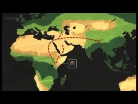 Homo erectus: fossils, timeline, and migration animations