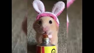 Cute and funny animals video-collection by Prince
