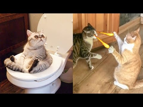 Try Not To Laugh Challenge – Funny Cat & Dog Vines compilation 2019
