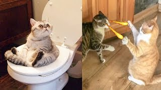Try Not To Laugh Challenge - Funny Cat \u0026 Dog Vines compilation 2019