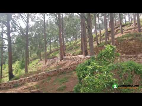 5 KANAL BEST LIVING TOP EXTREME LOCATION PLOT FOR SALE IN MURREE RESORTS NEW MURREE