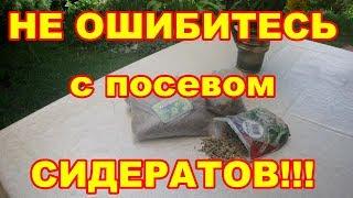 Нельзя ошибаться с посевом сидератов,каждому овощу свой сидерат! Иначе не миновать беды!!!
