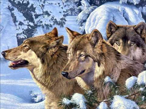 Wolf :: The Audiopedia