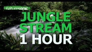 Deep Jungle Sounds - EXOTIC BIRDS & TRICKLING STREAM, OAXACA MEXICO
