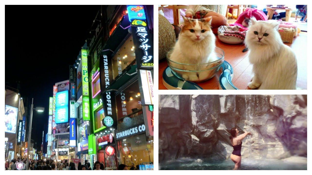 Cat Cafe Korea Myeongdong