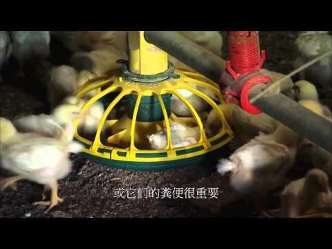 禽流感生物安全防護措施-一般養禽場業者(美國馬里蘭大學推廣中心提供)