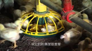 Commercial Poultry Farms Chinese Subtitles