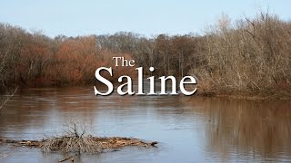 The Saline