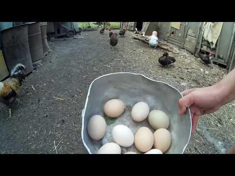 Видео блог от Егора - Смотреть видео без ограничений