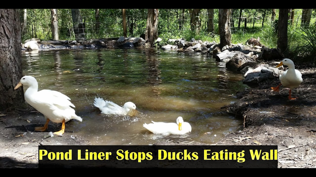 Pvc pond liner to stop ducks eating dam wall leaks youtube for Building a pond with liner