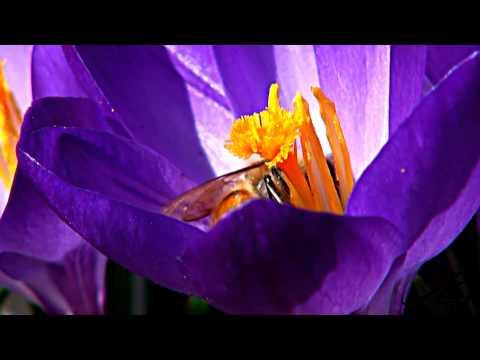 Honey bee decline spreading
