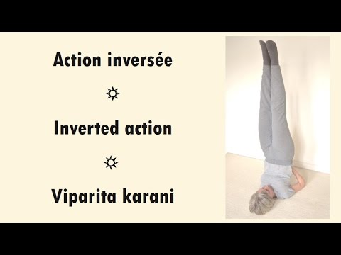 11 viparita karani translation  yoga poses
