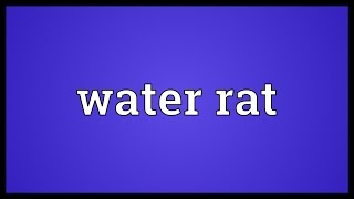 Water rat Meaning