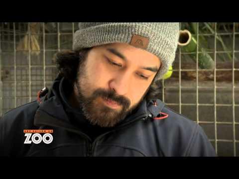 Une Saison Au Zoo - Voilà Papa ! (S5 Ep7)