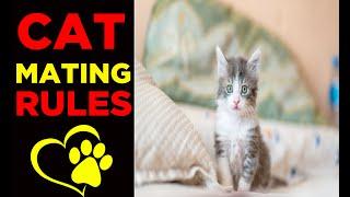 Cat Group Mating    Mating   Cat sex   female cat in heat