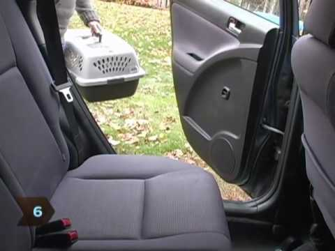 How To Keep Cats Safe In A Car