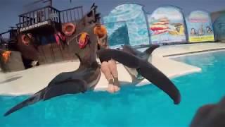 "Плавание с дельфинами, ""Акватория"" г. Ялта"