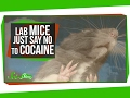 Mice That Resist Cocaine Addiction