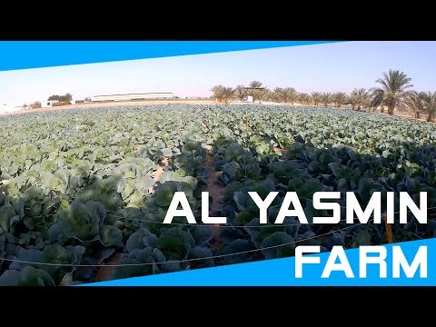 Let's Travel #1 | Al Yasmin Farm, Kuwait
