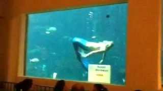 人魚に扮して水槽の中から誕生日の人にお祝いするという素敵なサプライ...