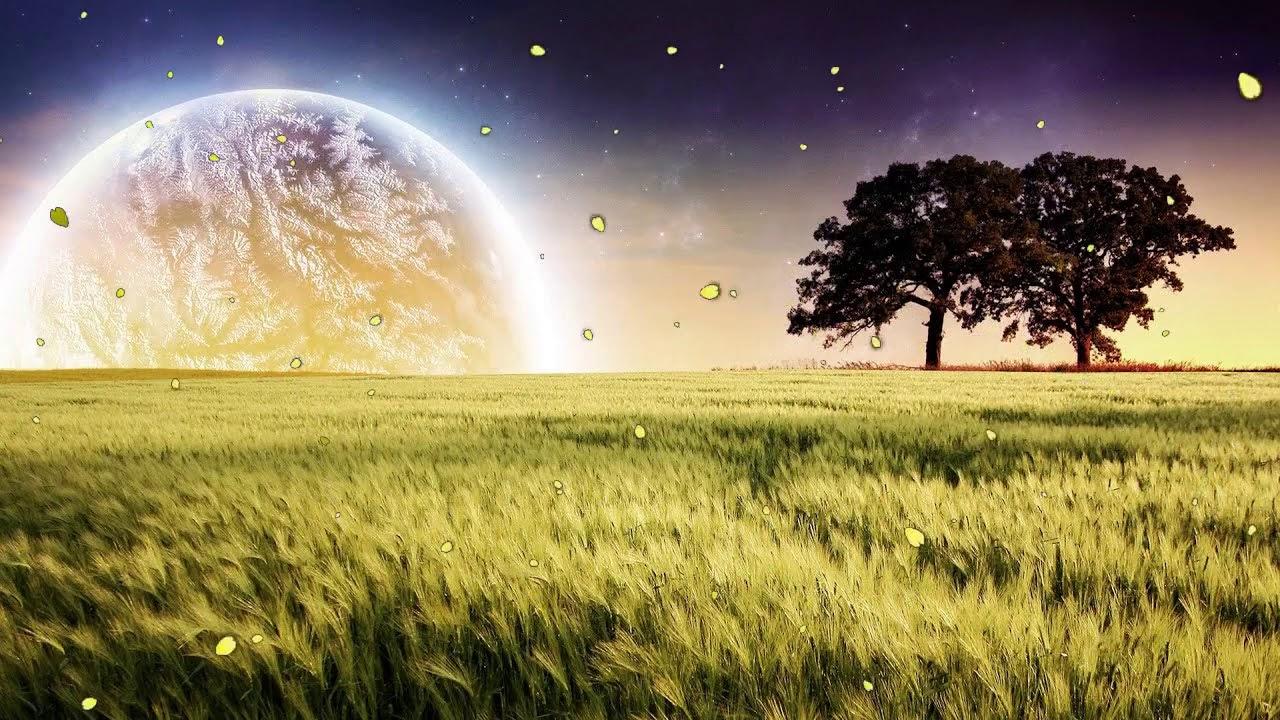 黄色的田野 将帮助您安宁 睡眠更好 自然 美丽的大自然壁纸 Youtube
