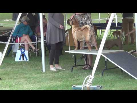 Canadian Shar-Pei National Specialty weekend All breed show Day 1 Thursday