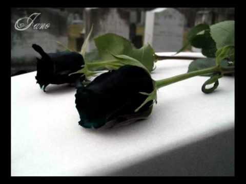 Julio Jaramillo Mis Flores Negras Pasillos De Oro Youtube