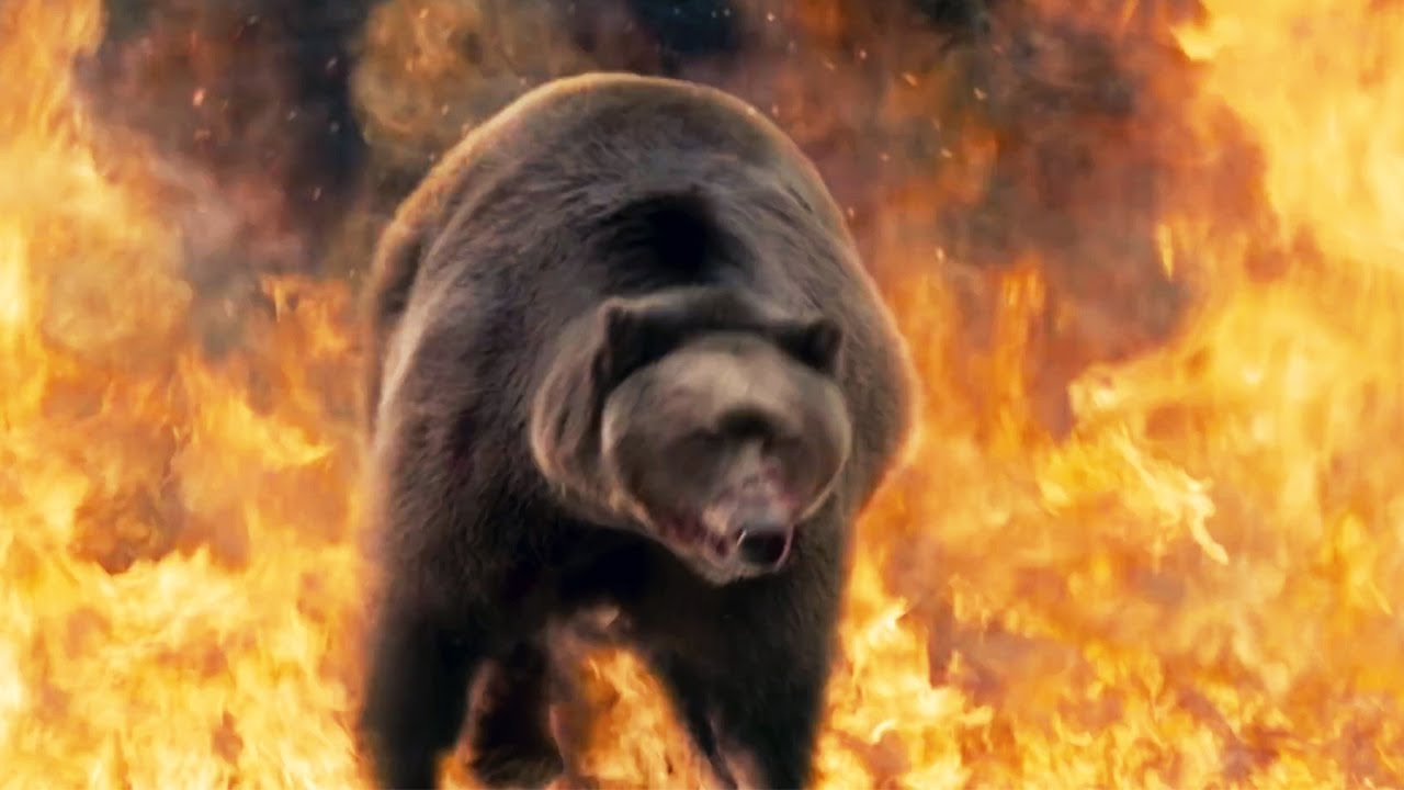 Into The Grizzly Maze 2015 Movie Review Youtube