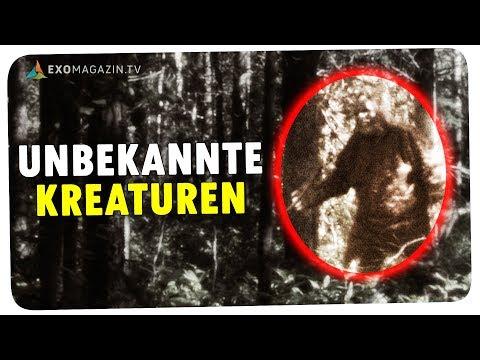 Unbekannte Kreaturen - Kryptozoologen auf der Jagd nach Bigfoot | ExoMagazin
