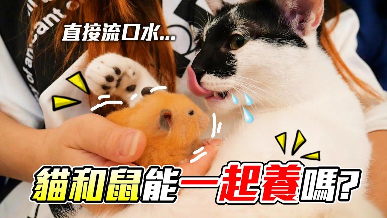 【維鼠日記】貓和鼠能一起養? 好孩子千萬不要模仿!【維特】#118