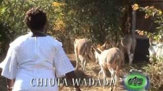 chiuta wadada katawa betsaida melody