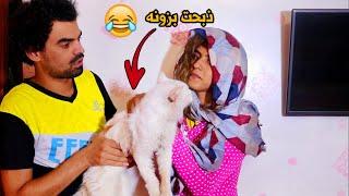 خباثه #ام دانيه ذبحت البزونه (القطه) #تحشيش  طه البغدادي