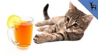 Repeat youtube video Cat Cafe Invades U.S.!