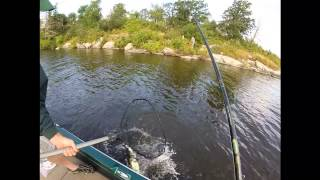 Musky Action