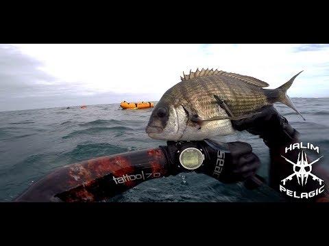 Chasse Sous Marine Algérie Oran SARS 2018