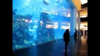 Аквариум в Дубай Молле, ОАЭ.(В самом большом в мире торговом центре