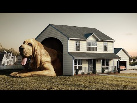 Top 10 Largest Dog Breeds In The World.