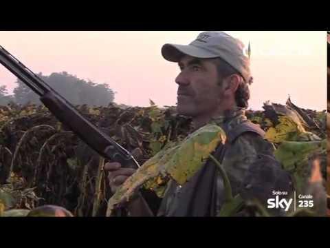 CACCIA TV SKY 235 - MIGRATORIA ITALIA E ALL
