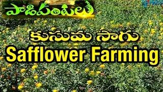 Safflower Farming In Dryland And Its Uses | Paadi Pantalu | Express TV