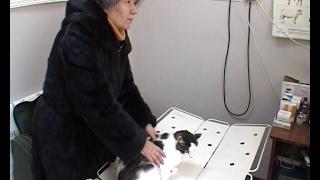 C 10 января этого года вступили в силу новые ветеринарные правила